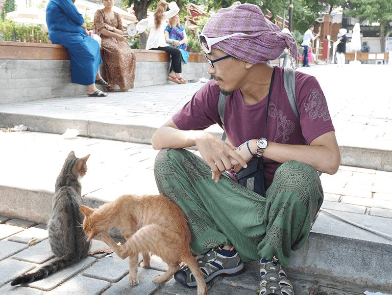 トプカプ宮殿の猫